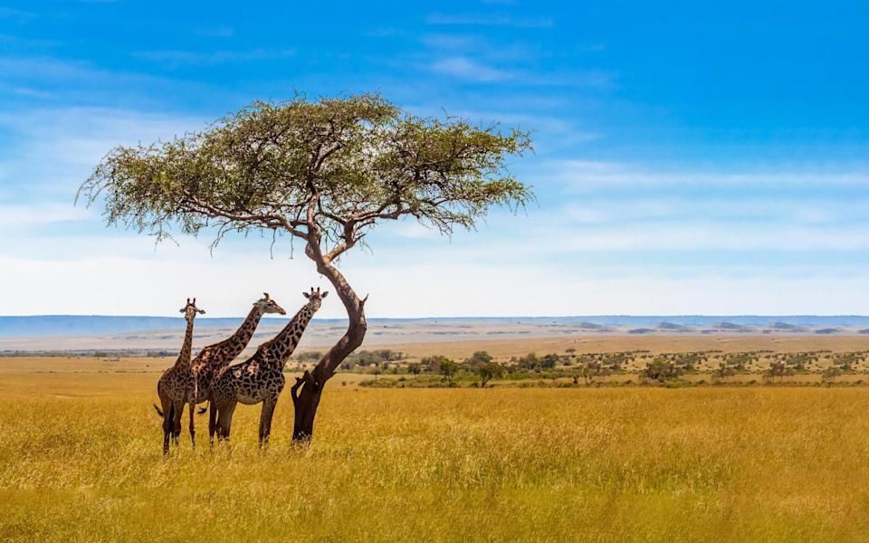 In Tanzania, tourism accounts for at least 10 per cent of GDP