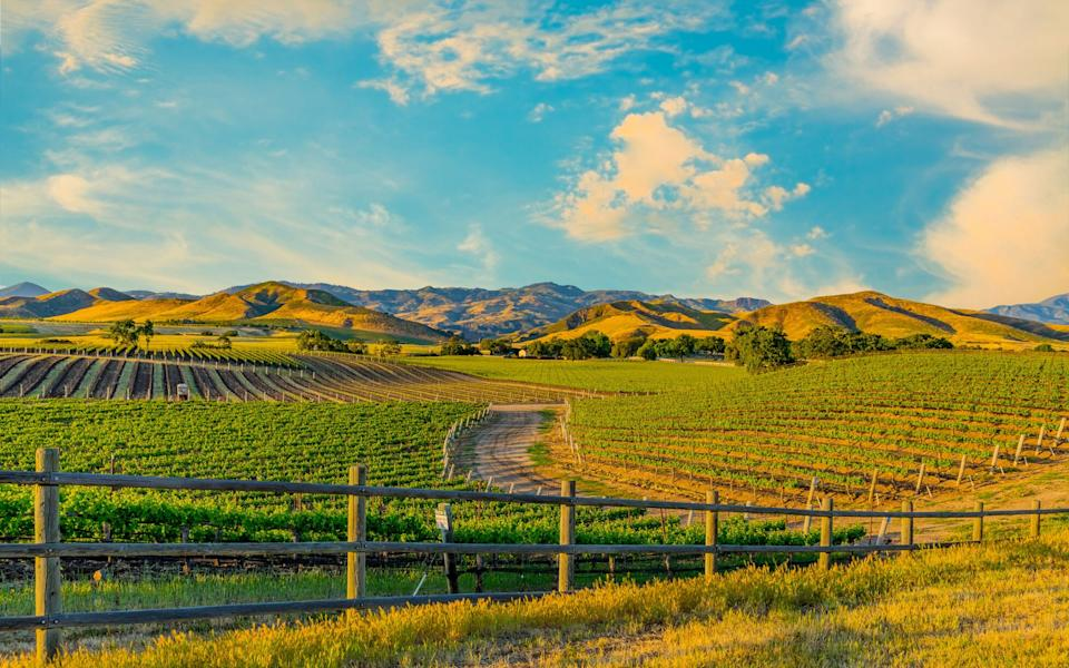 Napa Valley vineyards - getty