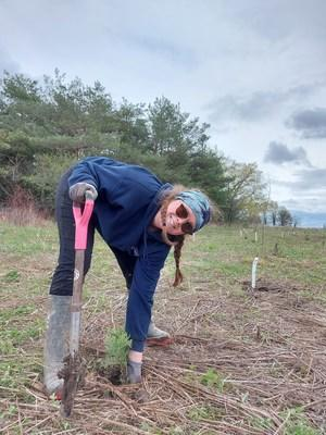 Brynn Sissons planting at the Rouge National Urban Park. Courtesy of Toronto and Region Conservation Authority (TRCA). (CNW Group/Forests Ontario)
