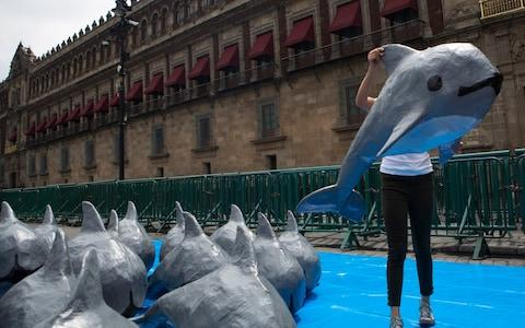 A woman with the World Wildlife Fund carries a papier mache replica of the critically endangered porpoise known as the vaquita marina, during an event in front of the National Palace in Mexico City. - Credit: AP