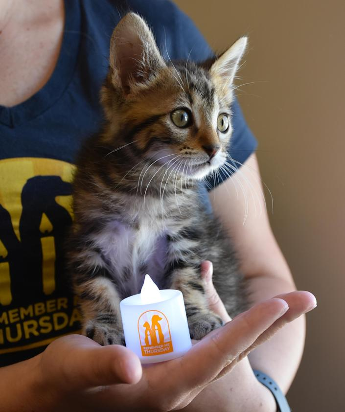 A kitten poses next to a candle. (Courtesy of Helen Woodward Animal Center)