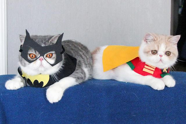<p>Batcat and Dobin (Snoopy, 2, and Doby, 9 months). The costumes range from SpongeBob Square Pants and Captain America to the Disney princess Snow White and the famous duo, Batman and Robin. (Photo: DailySnoopy/Caters News) </p>
