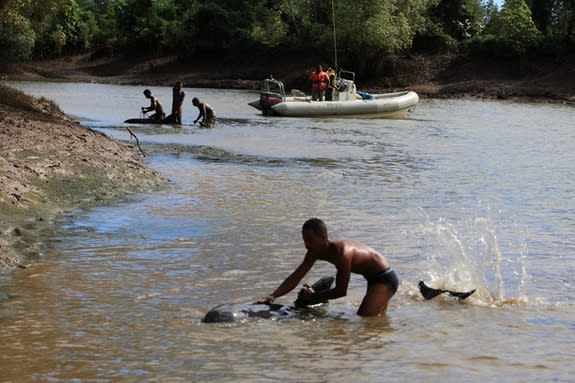 In May-June of 2008, the Wildlife Conservation Society led an international stranding response team to a mass stranding of approximately 100 melon-headed whales in the coastal mangroves of northeastern Madagascar.