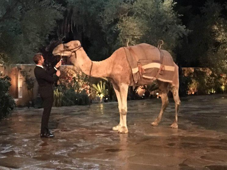 Nick with Lacey's camel (Photo: Chris Harrison)