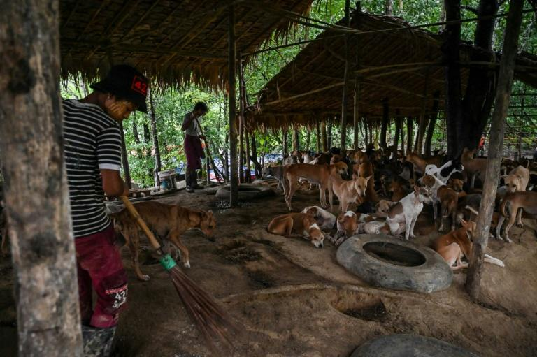 An estimated 1,000 people die from rabies each year in Myanmar, one of the highest rates in the world and a conservative estimate according to experts (AFP Photo/Ye Aung THU)