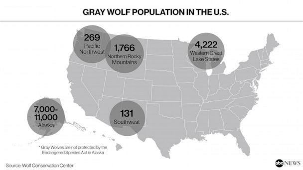 Gray Wolf Population in the U.S. (ABC News Photo Illustration, Wolf Conservation Center)