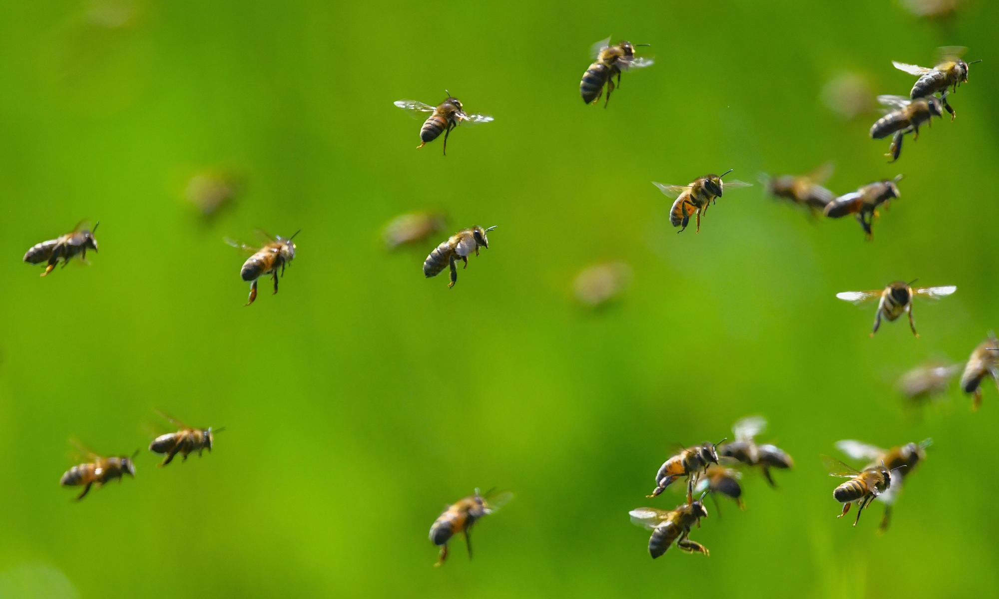 M&S faces backlash over plan to release 30m honeybees