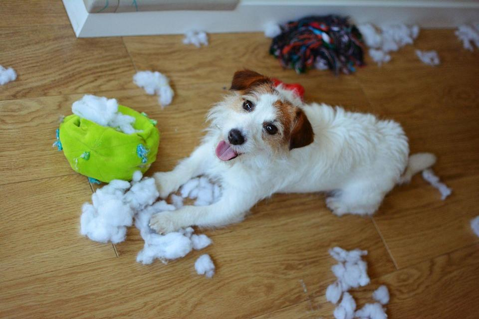"""<p>Whether your dog is 8 weeks old or 8 years old, their behavior could regress and leave your house a mess. </p><p>""""Close off areas she could potentially get into trouble in. Remove objects and furniture items that she might destroy,"""" Ori Baer, a pet fosterer and home-based pet boarder, tells Woman's Day. """"This reduces your stress level as you're going about your work day, knowing that she'll be safe and cannot get into trouble.""""</p>"""