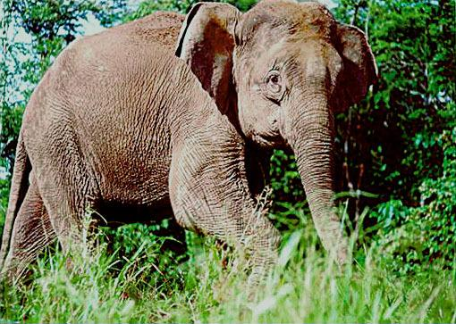 Elephant Relocation Scheme Fails to Prevent Deaths