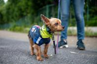The mini-mutts of Tokyo's Wan-Wan (bow-wow) Patrol strike comfort into the hearts of residents