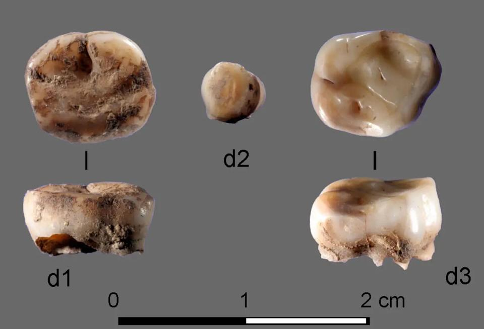 The tiny milk teeth revealed the ancient people (Russian Academy of Sciences)