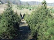"""<p><strong>French Creek, West Virginia</strong> (Starting November 29)</p><p>For over 30 years, <strong><a href=""""https://www.facebook.com/French-Creek-Christmas-Trees-311887328827353/"""" rel=""""nofollow noopener"""" target=""""_blank"""" data-ylk=""""slk:French Creek"""" class=""""link rapid-noclick-resp"""">French Creek</a></strong> has been sending families home with beautiful Christmas trees. Most visitors head there for their special Santa Event, hosted on the second Saturday of December every year. Kids can bring their letters and spend time with jolly St. Nick.<br></p>"""