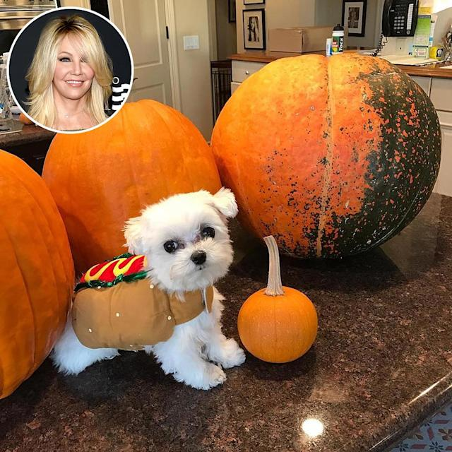 "<p>The cutest little pumpkin in this photo is the former <i>Melrose Place</i> star's tiny pup: ""Happy Halloween from this hot dog of mine! #happyhalloween."" (Photo: <a href=""https://www.instagram.com/p/BL91JTJBSZs/?hl=en"" rel=""nofollow noopener"" target=""_blank"" data-ylk=""slk:Instagram"" class=""link rapid-noclick-resp"">Instagram</a>/Getty Images) </p>"