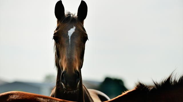 Save the Horses! Three Lawmakers Will Try to Ban Slaughter for Food