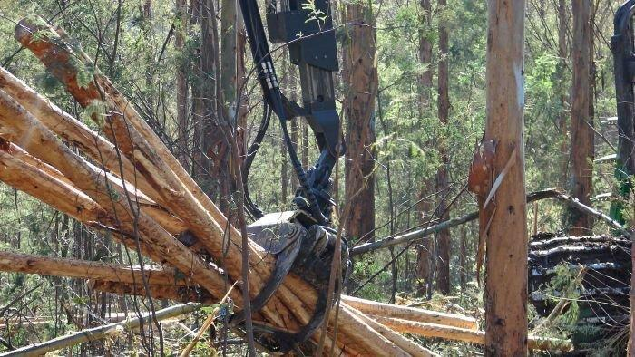 Timber group to lobby Upper House