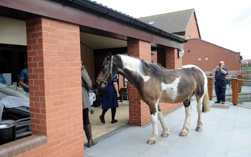 Horse Jake pays his dying owner a visit at her hospice - Hull Daily Mail / SWNS