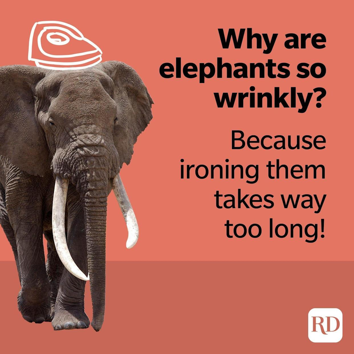 Why are elephants so wrinkly? Because ironing them takes way too long.