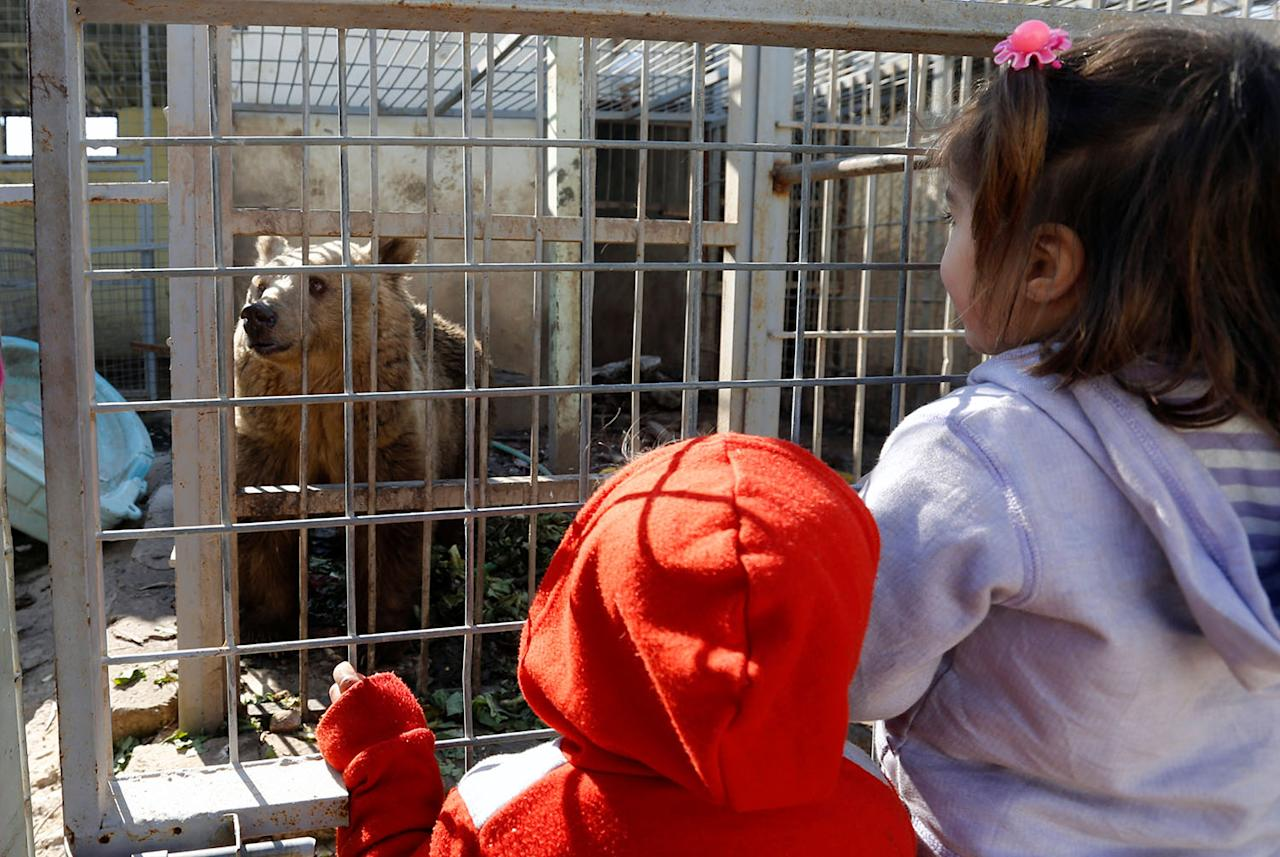 <p>Children look at a bear at Nour Park in Mosul's zoo, Iraq, Feb. 2, 2017. (Photo: Muhammad Hamed/Reuters) </p>