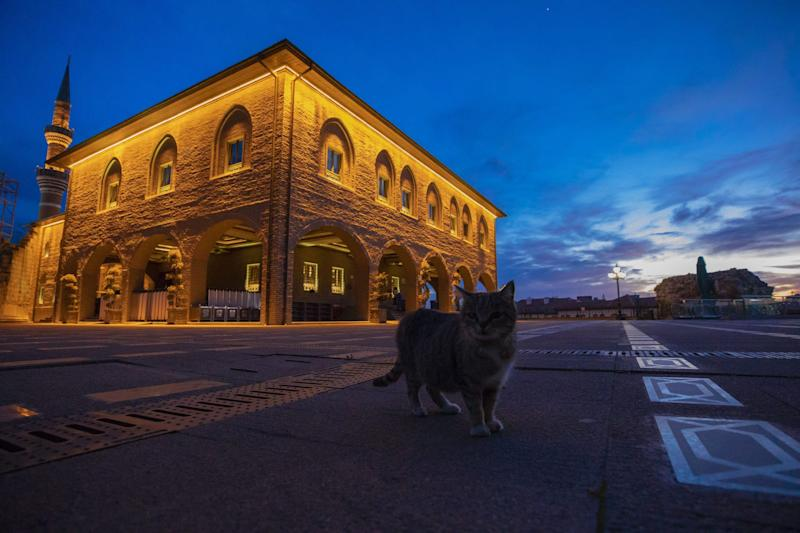 A stray cat stands in front of a closed mosque in Turkey.