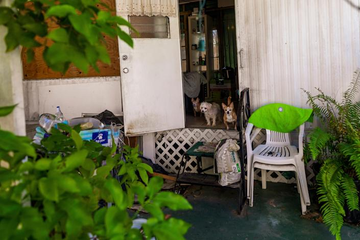 Elsa Romero shares her home with three dogs.
