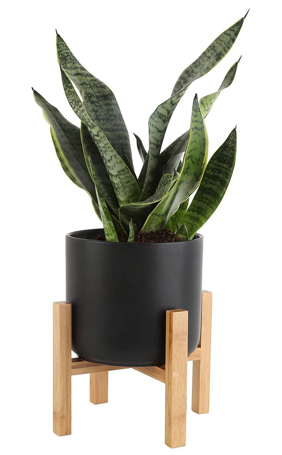 Let this snake plant slither into your life. (Photo: Amazon)