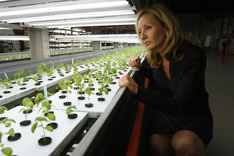 In a Chicago suburb, an indoor farm goes 'mega'