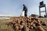 Egberto Mamani is seen working with potatoes that will be used to for the chuno potato dehydration process in Machacamarca, Bolivia, on June 30, 2021