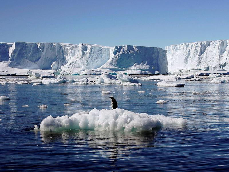An Adelie penguin stands on top of a block of melting ice near the French station at Dumont d'Urville in Antarctica: REUTERS