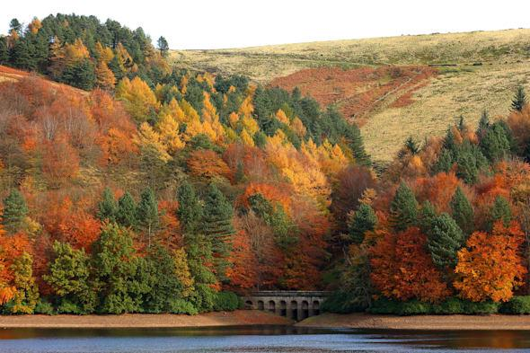 Signs of autumn are already beginning to show across the country and it's only the first of July!