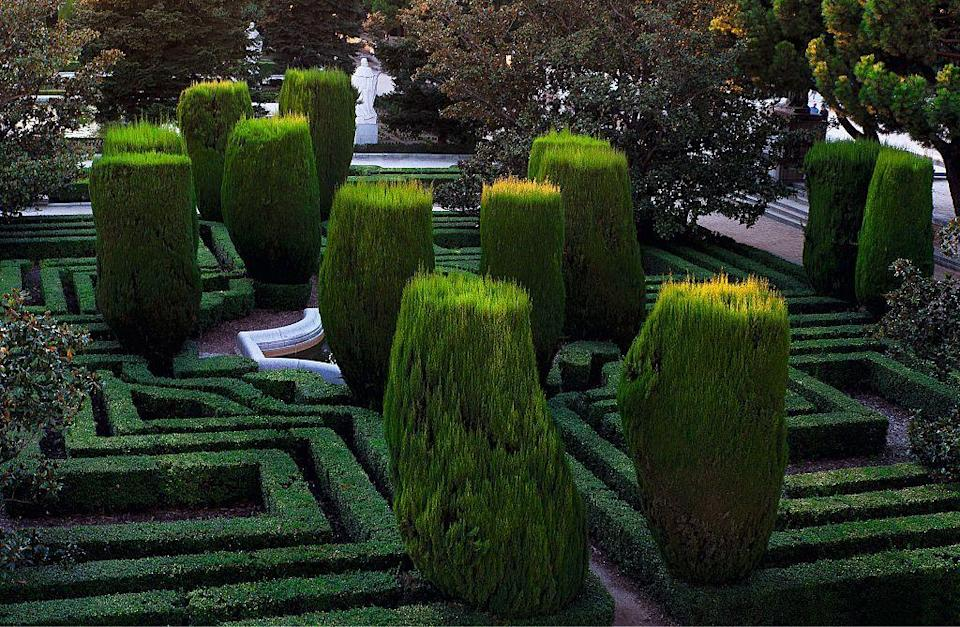 """<p>Meaning """"tree of life"""" in Latin, the arborvitae shrub makes for a great hedge due to its column-like shape that it takes as it grows. This dense, evergreen plant grows quickly and is easy to care for, making it very hardy. </p><p><br><strong>Where to plant:</strong> Full sun<br><strong>USDA Hardiness Zones:</strong> 3</p>"""