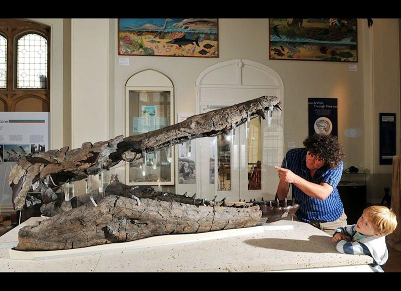 The giant jaws of a huge marine reptile are on permanent display at Dorset County Museum in the UK. Dating back around 155 million years, the pliosaur skull was discovered on the nearby Jurassic Coast World Heritage Site, and is one of the largest and best preserved fossils of its kind ever found.
