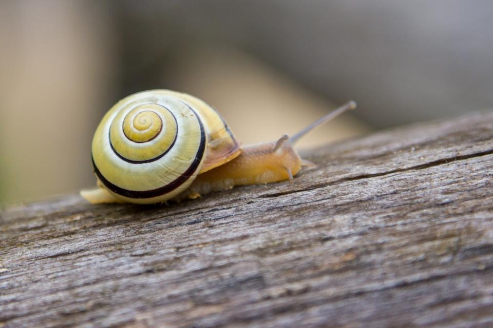 snail crawling on a tree close up