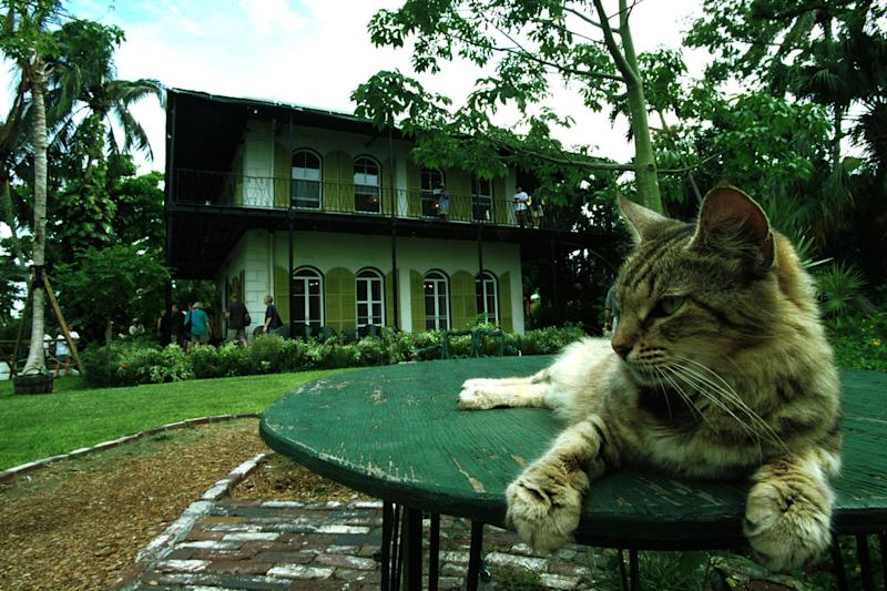 A cat rests on a table in the garden of author Ernest Hemingway's home. (Georges DeKeerle via Getty Images)