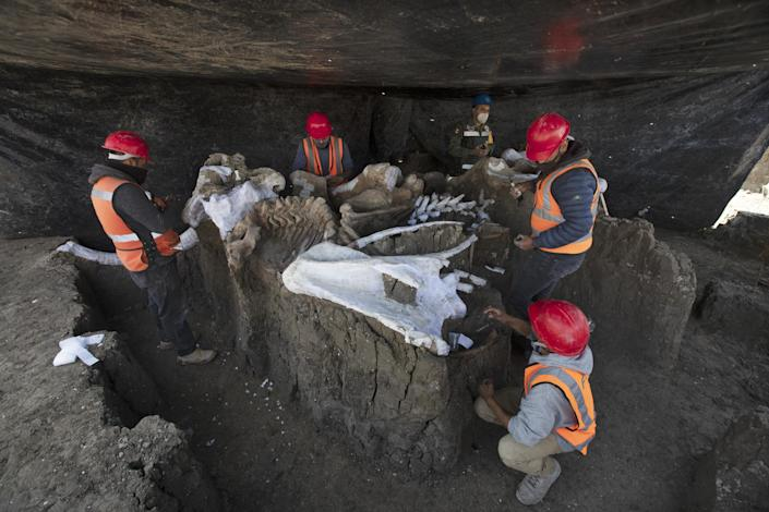 Paleontologists work to preserve the skeleton of a mammoth discovered at Mexican airport site: AP