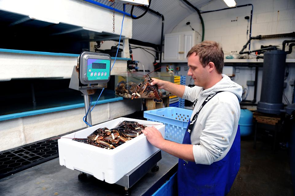 Shellfish processed by Baron Shellfish in Bridlington – which is closing, citing Brexit red tape. (SWNS)