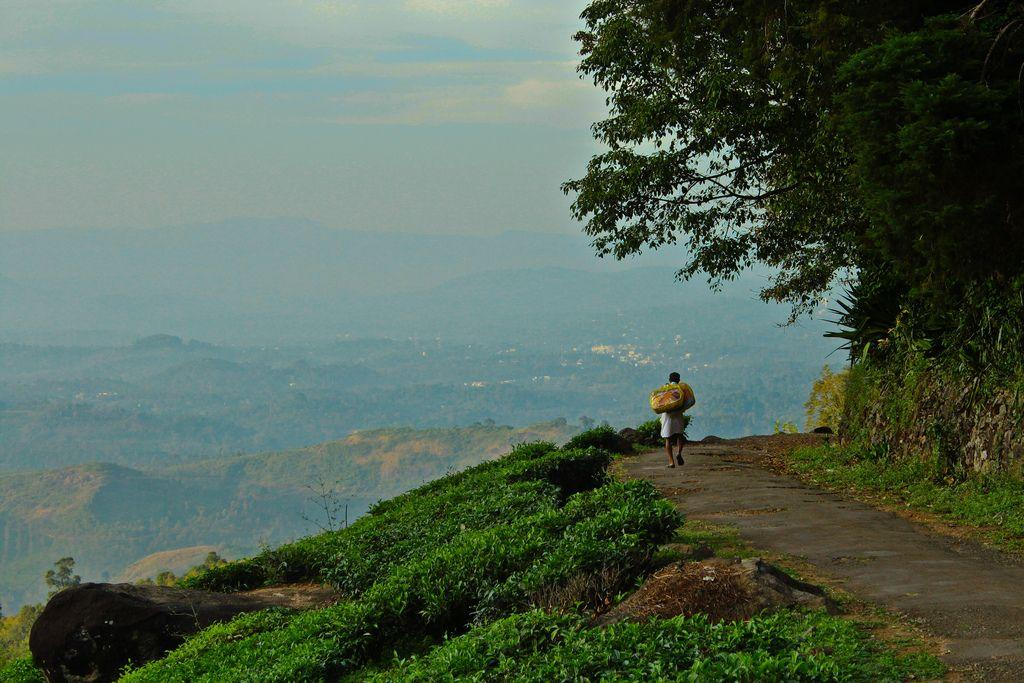 "<strong>6.    WAYANAD</strong><br />If you aren't into 'relaxed vacations' Wayanad is just the place for you. It's brimming with energy unlike cities. Blessed with nature's best - the Muthanga Wildlife Sanctuary, Chembra Peak and Edakkal Cave, there are many attractions Wayanad boasts of. Do some wildlife spotting or climb a hill, will ya? Reaching Wayanad is convenient as it is well-connected to Kozhikode, Kannur, Ooty and Mysore. HolidayIQ traveller Arundhuti from Bangalore avers, ""There are three things to do in Wayanad - trekking, trekking and trekking."""