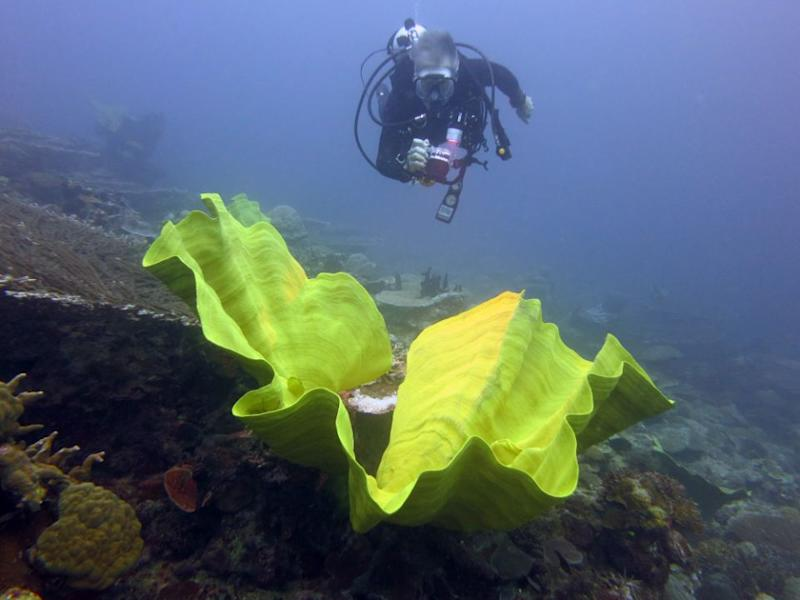 One of the prettiest dive sites in the area is called Alice in Wonderland. Source: Dive Planit