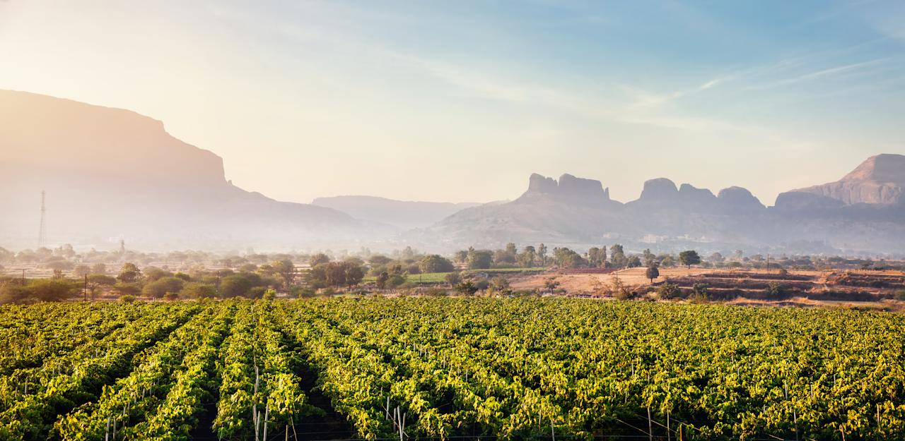 Head to Nashik and make the most of the winters with wine tours, luxurious stays and amazing food! Choose from the many vineyards and make the most of the winters sipping on your favourite wines while watching the sun set over the huge vineyards. Some vineyards will also allow you to get your feet dirty and stomp some grapes yourself. As an added bonus, you can buy a bottle of your favourite vino at a discounted price at these vineyards. We recommend staying here for the night, because you don't want to drink and drive.