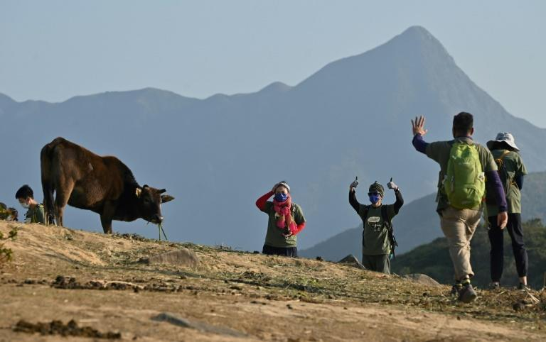 An influx of hikers has transformed Hong Kong's remote Tap Mun (Grass Island) and wiped out the primary food source for the island's feral cows