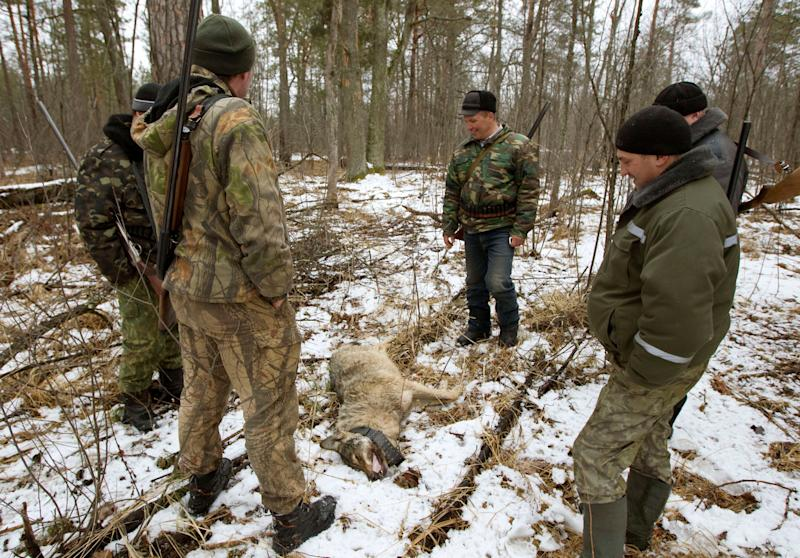 Men stand by a wolf killed in a forest after hunting for wolves near the 30 km (18 miles) exclusion zone around the Chernobyl nuclear reactor near the village of Demidov, about 370 km (217 miles) southeast of Minsk March 20, 2011. Despite radiation, wildlife in and around the exclusion zone has been teeming since people left the area around Chernobyl after the 1986 nuclear disaster. Wolves, foxes and racoon dogs can be hunted all year around as they are not wanted in Belarus, the keepers said. REUTERS/Vasily Fedosenko (BELARUS - Tags: DISASTER ANIMALS ENVIRONMENT)