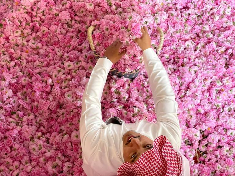 Roses from the Saudi city of Taif are harvested for oil to clean the sacred Kaaba in Mecca