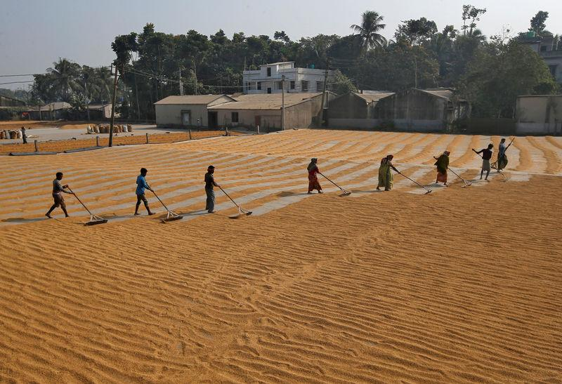 Workers spread rice for drying at a rice mill on the outskirts of Kolkata