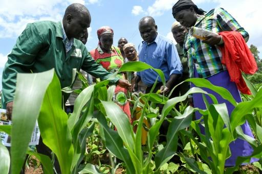 Understanding the armyworm: Plant expert Lukas Wekesa, left, offers advice to farmers facing an outbreak of the pest in Vihiga, western Kenya