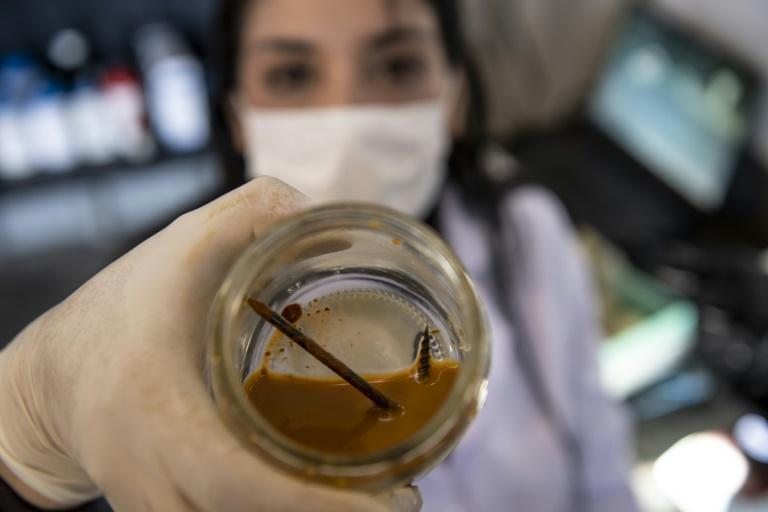 Chilean biotechnologist Nadac Reales shows a nail and screw inside a jar with metal-eater bacteria in her laboratory at a mining site in Antofagasta (AFP/MARTIN BERNETTI)