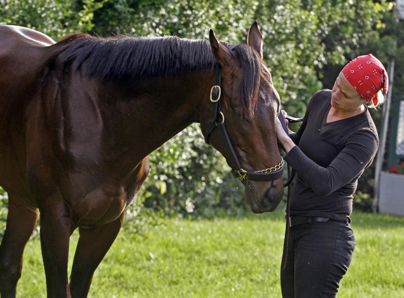 Exercise rider Jennifer Patterson rubs the face of Kentucky Derby winner and Preakness Stakes hopeful Orb as he grazes outside the stakes barn at Pimlico Race Course Wednesday, May 15, 2013, in Baltimore. The Preakness Stakes horse race is Saturday. (AP Photo/Garry Jones)