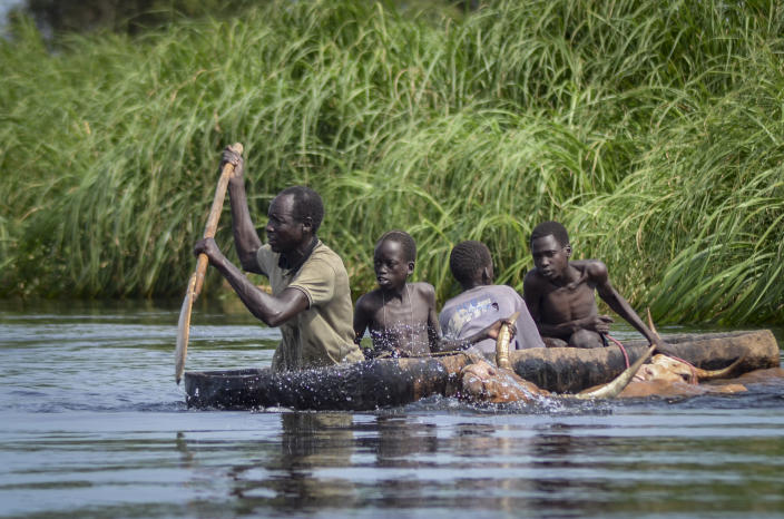 A father and his sons transport cows from a flooded area to drier ground using a dugout canoe, in Old Fangak county, Jonglei state, South Sudan Wednesday, Nov. 25, 2020. Some 1 million people in the country have been displaced or isolated for months by the worst flooding in memory, with the intense rainy season a sign of climate change. (AP Photo/Maura Ajak)