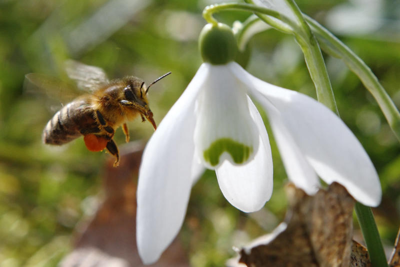 Tiny MIT chip helps bee-sized drones navigate