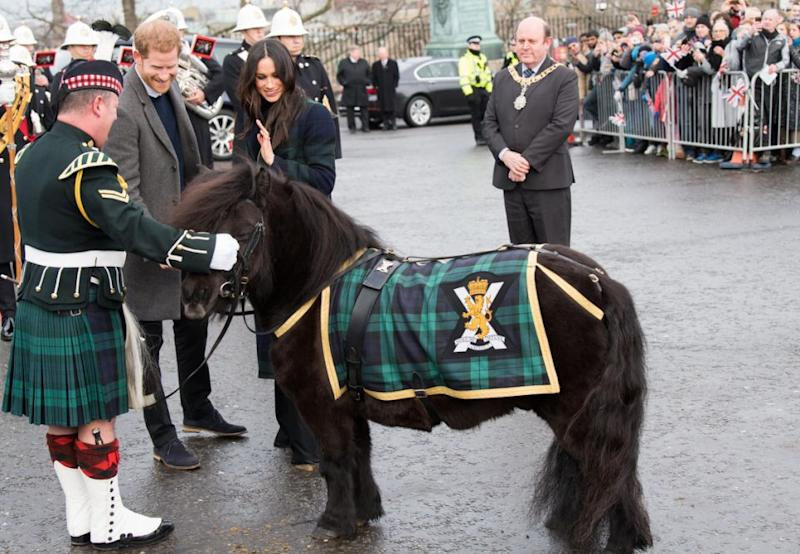 However the playful pony got a little bit too close for comfort. Photo: Getty Images