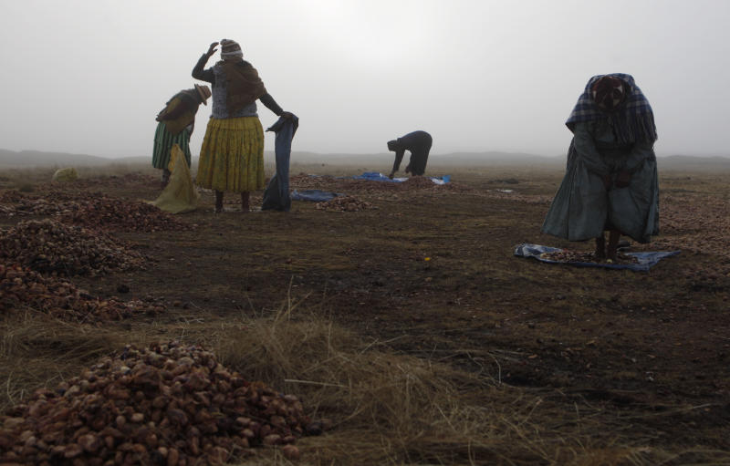 """In this July 22, 2013, Aymara Indian women walk barefoot on potatoes to remove frozen dew and the peels as they work in extreme cold temperatures on La Cumbre mountain to prepare a local staple called """"chuno"""" on the outskirts of La Paz, Bolivia. At the end of the harvest, farmers carry huge sacks of potatoes up the snow-capped Andes and spread the spuds out on the ground for three days until they are frozen solid. Then they stomp the frozen potatoes with their bare feet and let the resulting mash dry in the sun until it is a dark color. (AP Photo/Juan Karita)"""