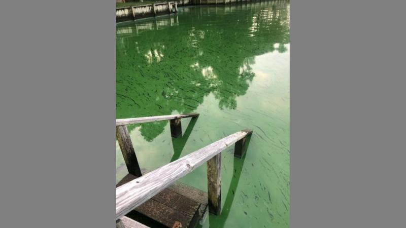 'Keep away:' Dog-killing toxic algae bloom infests pond at a popular Lake Norman park
